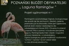PBO_Laguna-flamingow15580