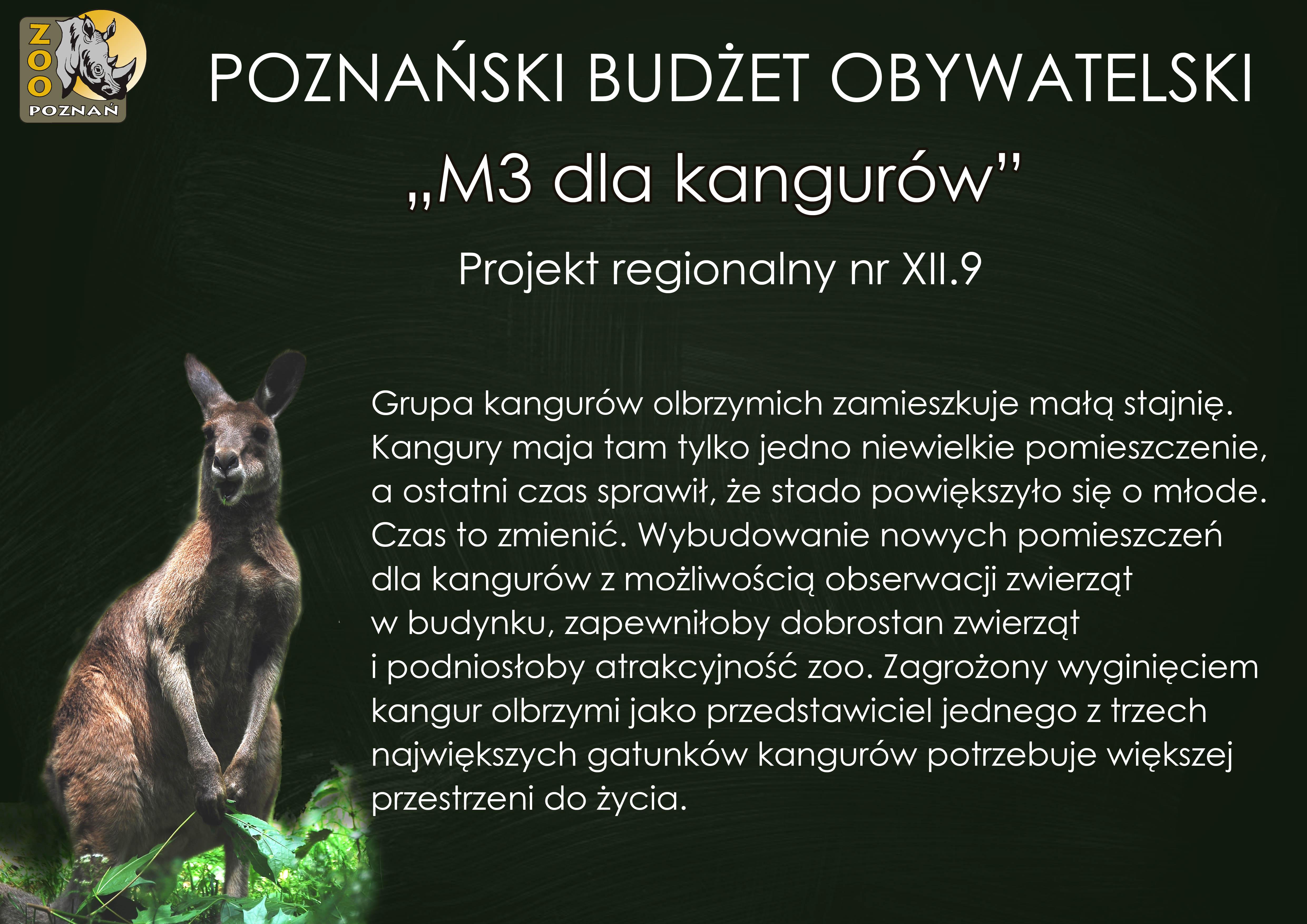PBO_M3-dla-kangurow15578